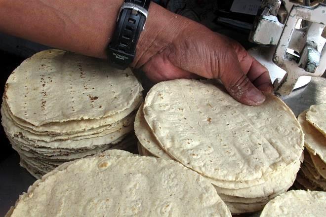 Avanza maíz blanco en EU por tortilla